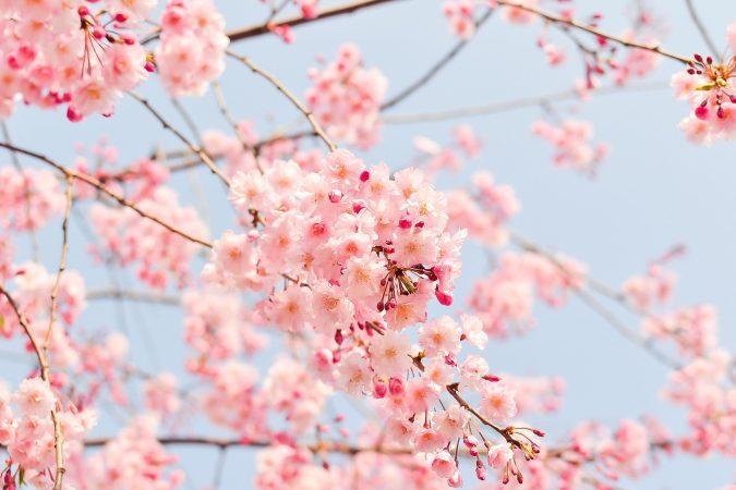 arti warna dalam desain grafis - warna merah muda