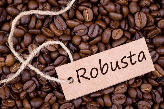 jenis jenis kopi - Kopi Robusta