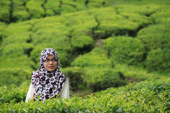 negara penghasil teh - indonesia